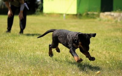 Guide to Choosing the Best Dog Trainer