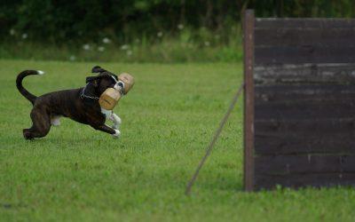 Dressage Canin: à quoi s'attendre