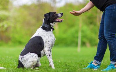 Dressage de chiens – Les compétences les plus importantes pour votre chien