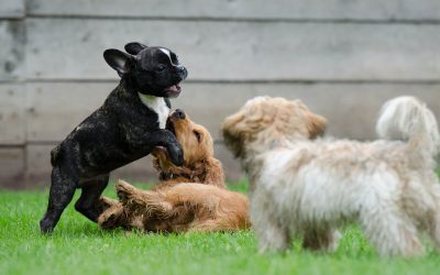 8 Reasons to Invest in Dog Training